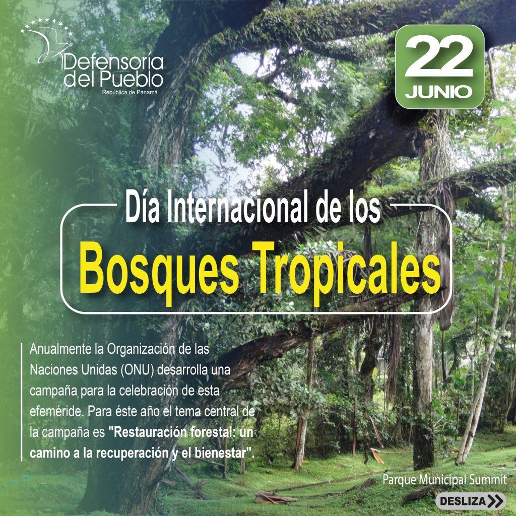 Día Internacional de los Bosques Tropicales